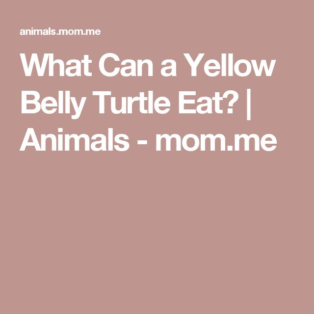 What Can a Yellow Belly Turtle Eat? | Animals - mom.me