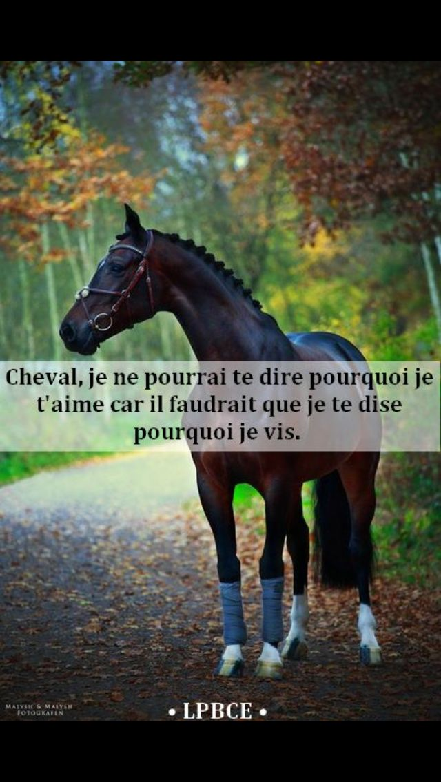 Horse, I cannot tell you why I love you because I would have to tell you why I live.