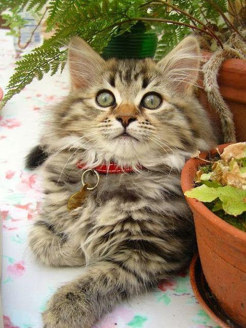 Imagens de Gatos Engraçados                                                                                                                                                                                 Mais