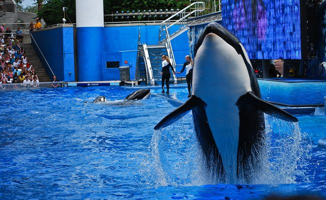 A Timeline of SeaWorld's Demise: A Victory for Animal Rights Activism | Care2 Causes