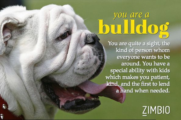 I took Zimbio's 'What Kind of Dog Are You? quiz and I'm a Bulldog. What kind are you?