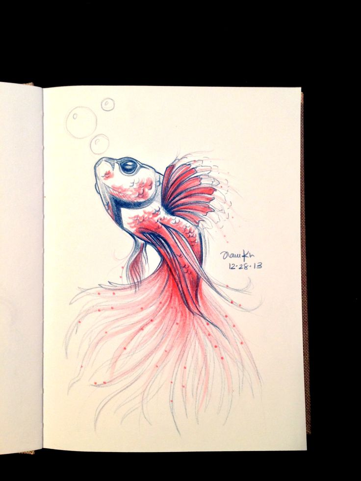 127 best Betta Beauties images on Pinterest   Beautiful fish, Betta ...