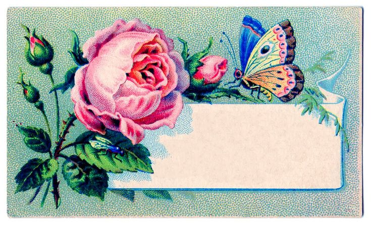 Vintage Images - Label - Rose & Butterfly