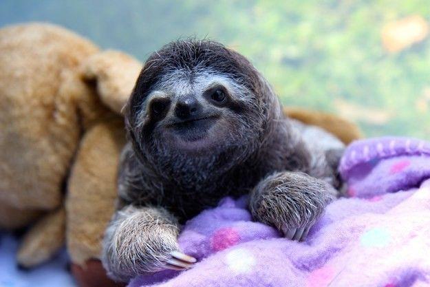 1. Посмотрите на этого маленького ленивца. Он слишком мал, чтобы узнать, что на свете существуют налоги, студенческие кредиты и магазин на диване.