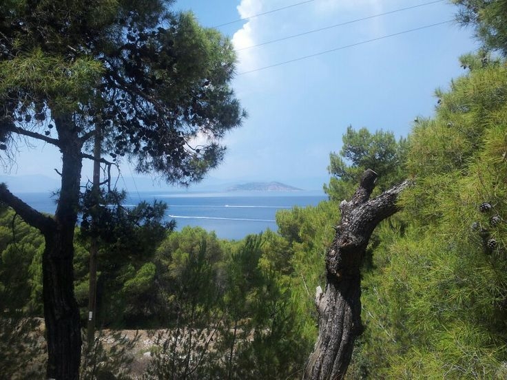 Agistri pine forest looking over the mediterainian sea
