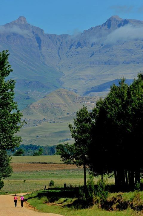 Sunday morning run on the Cobham road, Underberg, Southern Drakensberg. Beautiful view of Hodgson's Peaks (Giant's Cup)