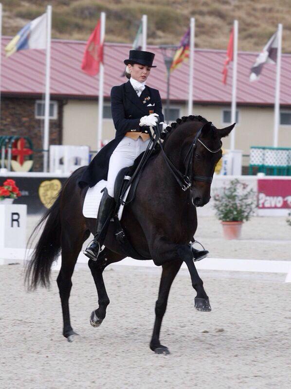 55 Best Images About Horses Dressage On Pinterest