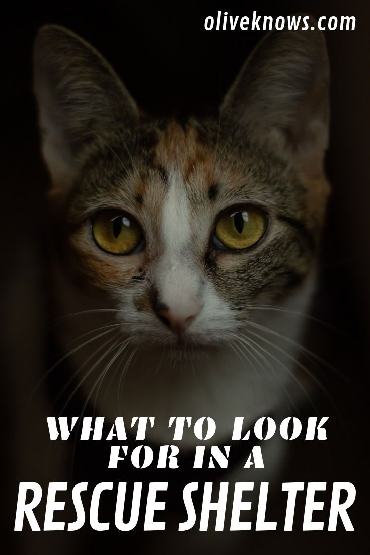 What To Look For In A Rescue Shelter Oliveknows Cat Safety Cat Rescue Shelter Cat Care Tips