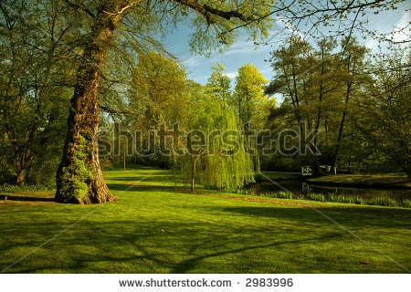 stock photo : Green scenery in park with small lake