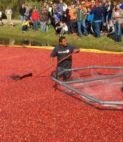 What I learned about harvesting cranberries after visiting DeGrandchamp Farms in South Haven, Michigan, to see the cranberry harvest.