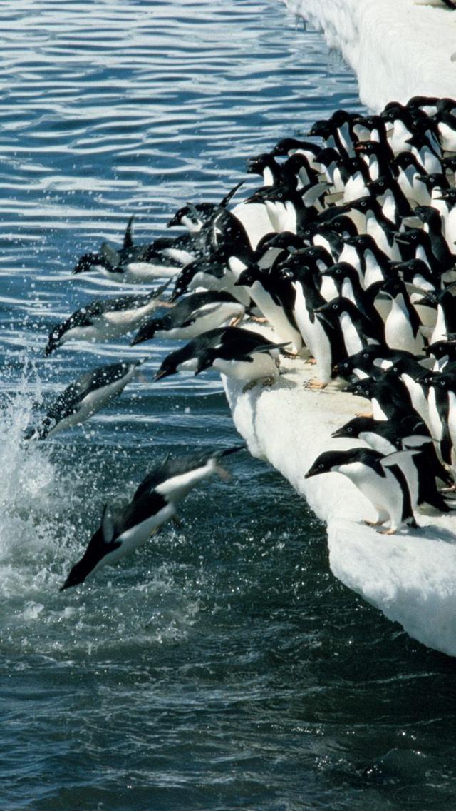 The Emperor Penguin Migration Natural World Safaris