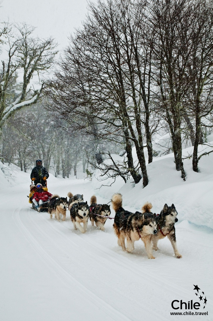 Would you like to do this? Come to Chile  this winter!!