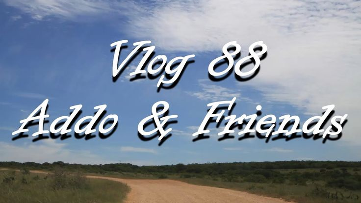Vlog 88 Addo & Friends - The Daily Vlogger in Afrikaans
