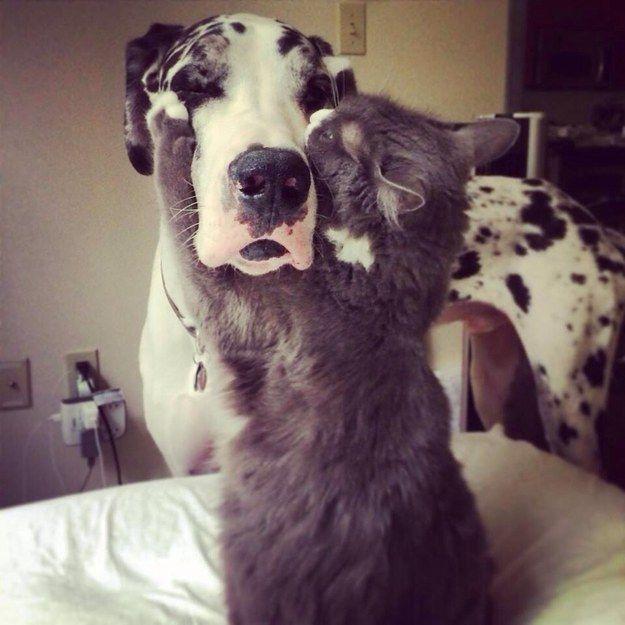 Ce câlin pour bien commencer la journée. | 21 moments de complicité entre chiens et chats