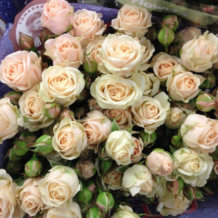 Creamy/nude sort of shade!!! Very pretty spray rose called 'Jana' . Sold in bunches of 10 stems from The Flowermonger, the wholesale floral home delivery service
