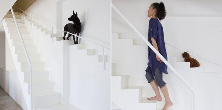 escalera especial para perros