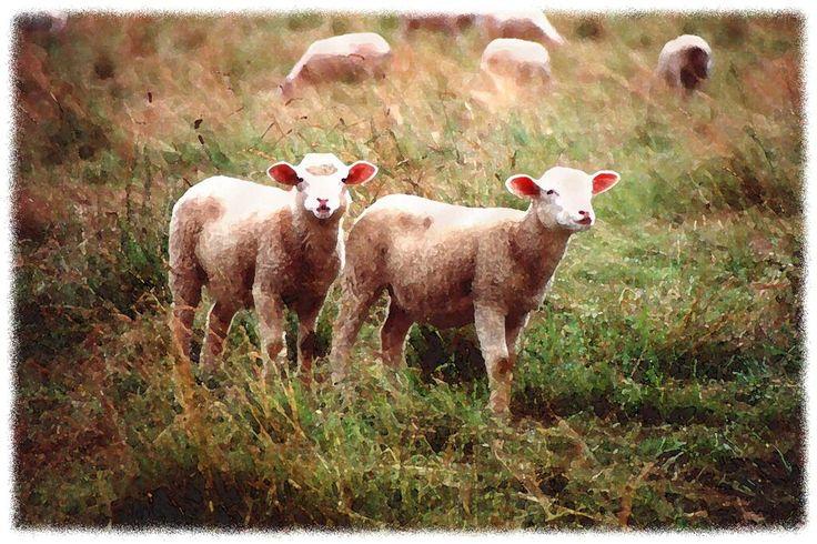 Dropbox - Sheepmeadow wc8x12.jpg
