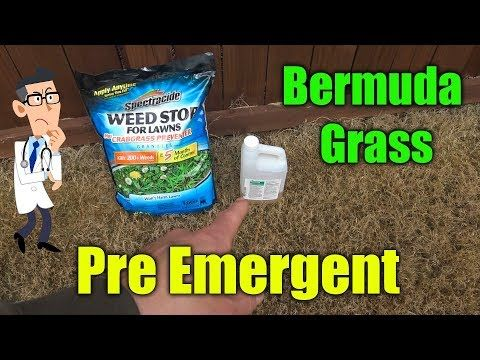 Preemergent For Bermuda Gr Amazing Results With Pre