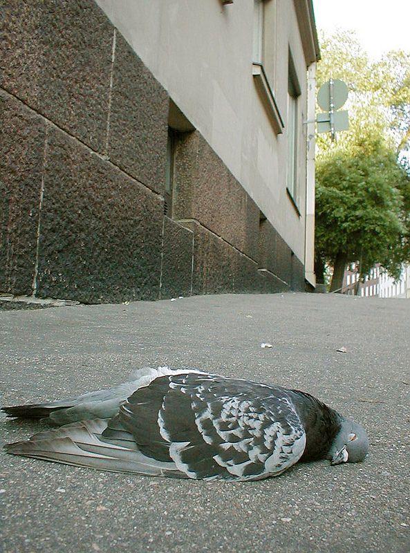 A dead bird on the sidewalk. https://www.flickr.com/photos/tietoukka/33220507062/