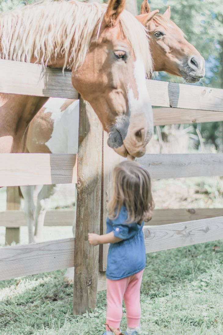 Maryland Farm Family Session | Marie Windsor Photography