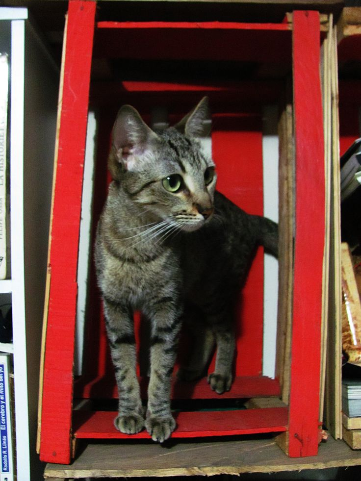 My Kitty Cat Nina In The Palette Bibliotheque Mi Nina Pinterest Posts The Palette And The