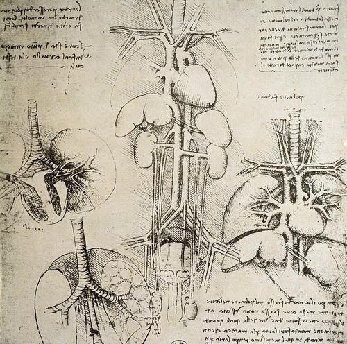 Anatomical sketches by Leonardo Da Vinci