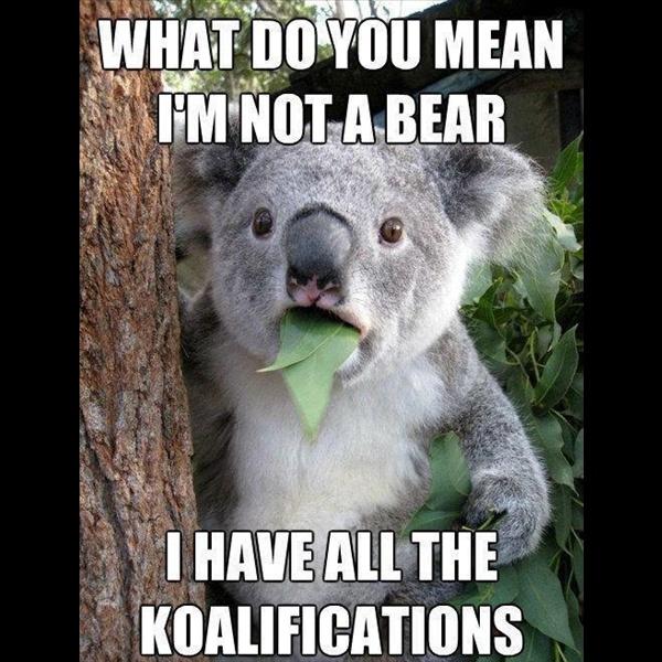 http://lovequotesimages.net #lol #funny #meme #quotes ...  Funny Koala Memes