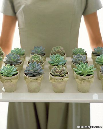 Enduring Favors: Plant pots that have been primped for the occasion, then line them on a tray like rows in a garden. Sponge-paint 2-inch-diameter terra-cotta pots; let dry. Fill planter with potting soil, plant rosette succulent, then tie 5/8-wide double-faced satin ribbon in a bow below lip of planter. Source Martha Stewart Weddings