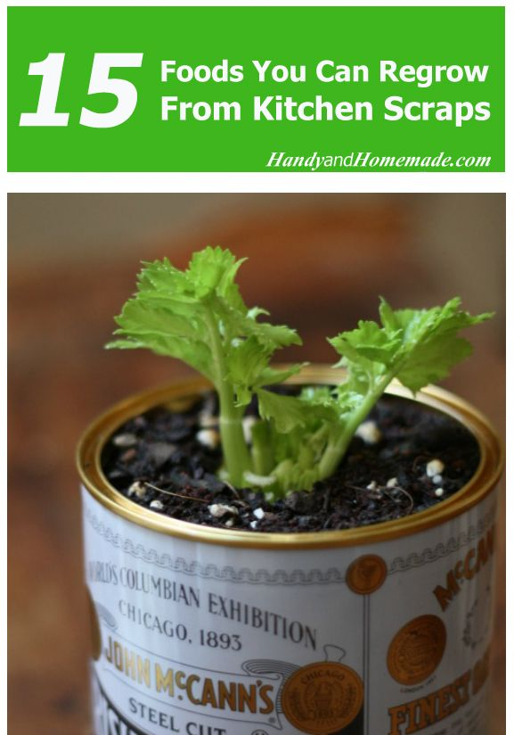 15 Foods You Can Regrow From Kitchen Scraps
