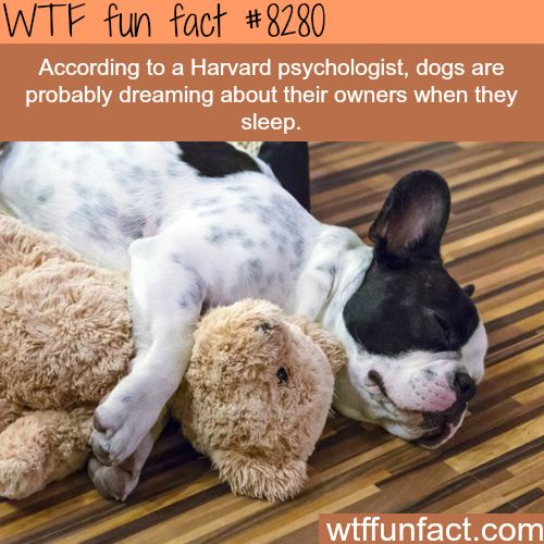 Dogs probably dream about their owners - WTF fun facts
