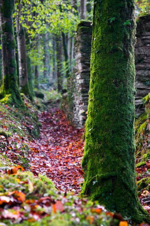 Maiden in Cornwall - Liv's Picks: Idless Woods