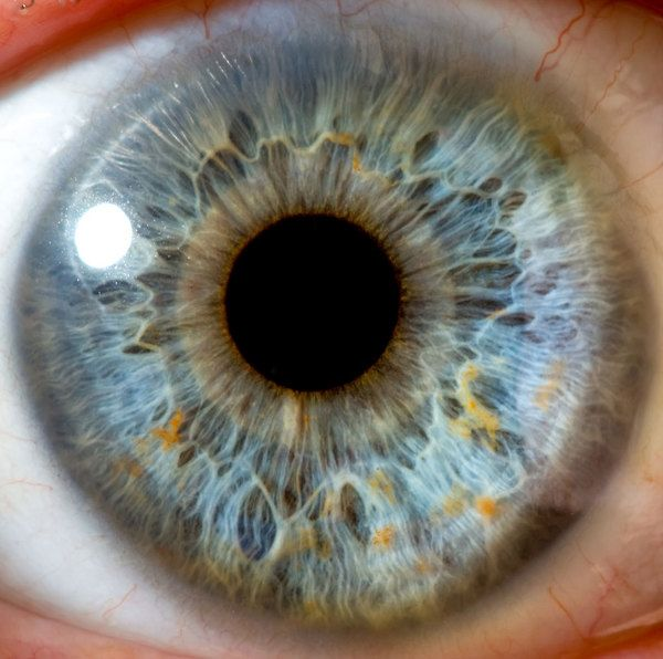 Scientists have discovered a previously unknown body part, dubbed Dua's layer, lurking in the human eye...