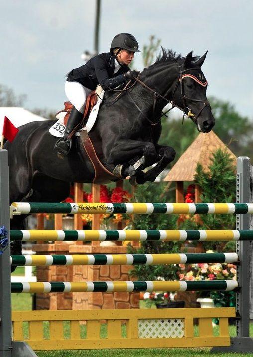 Grand Prix Horse Bizi Ferguson