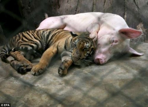 Even we can learn a thing or two from animals. – Alicia Wilson