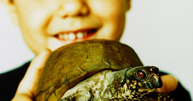 Como fazer uma fantasia de tartaruga. A maior parte de uma fantasia de tartaruga é feita com um agasalho verde, restando a tarefa de criar o casco. Escolha a partir de vários métodos diferentes para fazer um casco de tartaruga fácil e incrível para seus filhos.