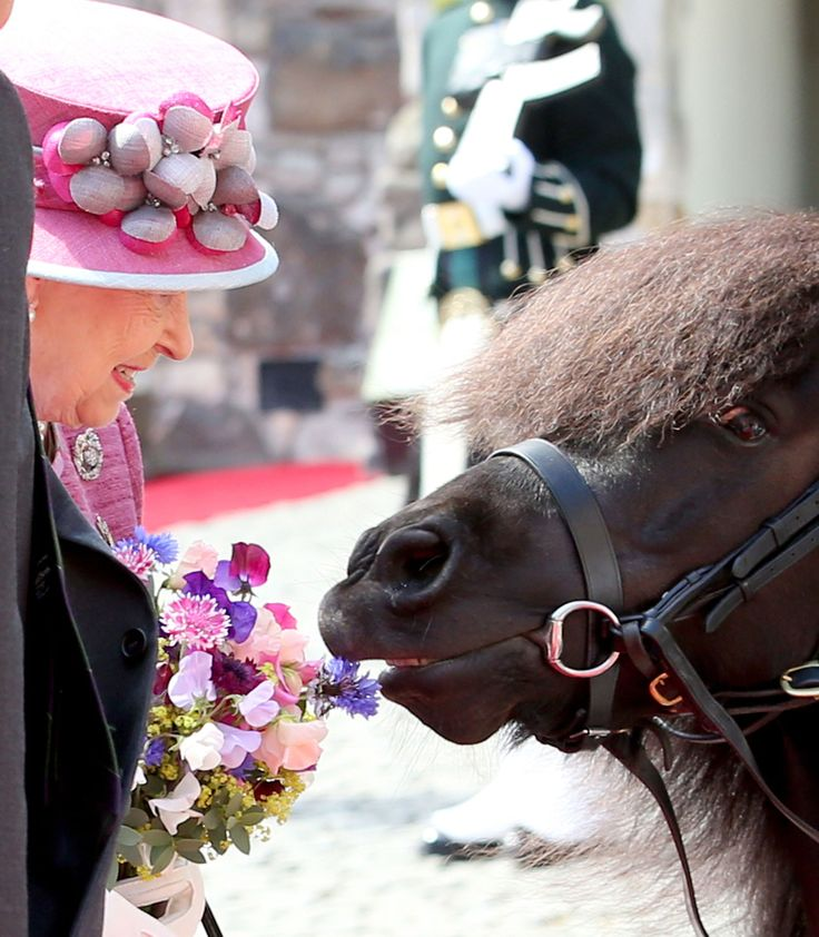 Shetland Pony Cruachan IV, the mascot of the Royal Regiment of Scotland, takes a nibble from a posy held by Queen Elizabeth II during a visit to Stirling Castle, as she marked 70 years since being appointed Colonel-in-Chief of the Argyll and Sutherland Highlanders. via @AOL_Lifestyle Read more: https://www.aol.com/article/lifestyle/2017/07/06/queen-pony-flowers-scotland/23019720/?a_dgi=aolshare_pinterest#fullscreen