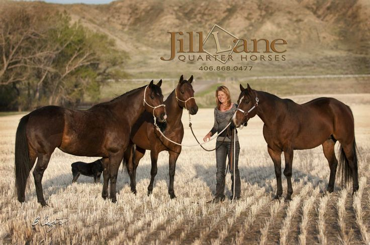 Jill Lane of Jill Lane Quarter Horses and 3 of her prized ...