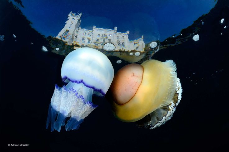 Adriano Morettin, Italy, Touch of magic. Finalist, #Underwater Species, #WPY2014