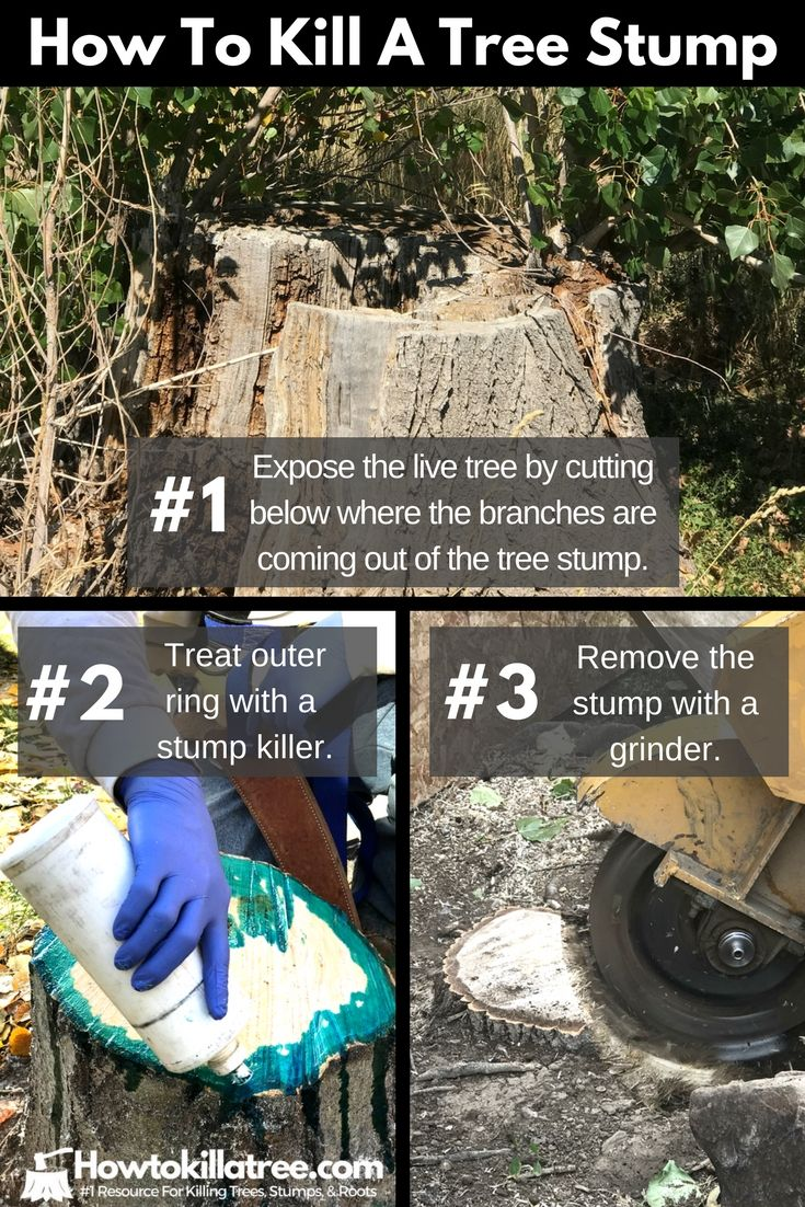 Pin On How To Kill A Tree Stump