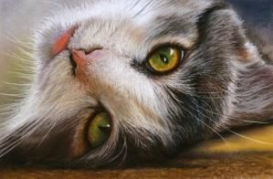 Cats Eyes ~ Peter Williams, pastel by leslie