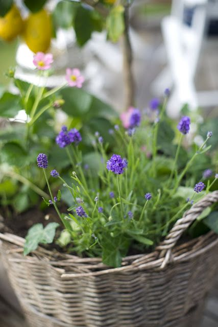 A beautiful basket of bitty blooms.