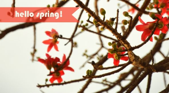 Free Facebook Cover for Spring