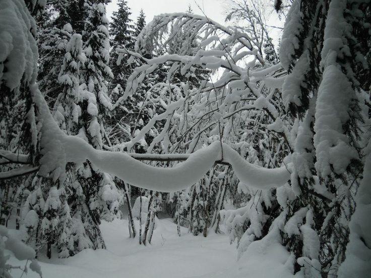 "Glimpse from my own wilderness tracks in the Oslo Forest - Towards ""Æljeskallebua"" - Lørenskoghøgda."
