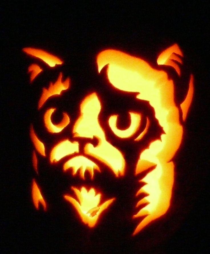 Best ideas about cat pumpkin on pinterest