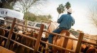 www.martinaburianova.cz Horses - Arizona, Wickenburg - Roping