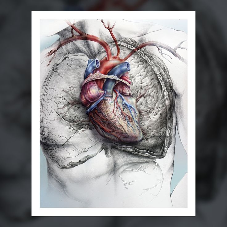 800+ best Anatomy in Everything images on Pinterest | Anatomy ...