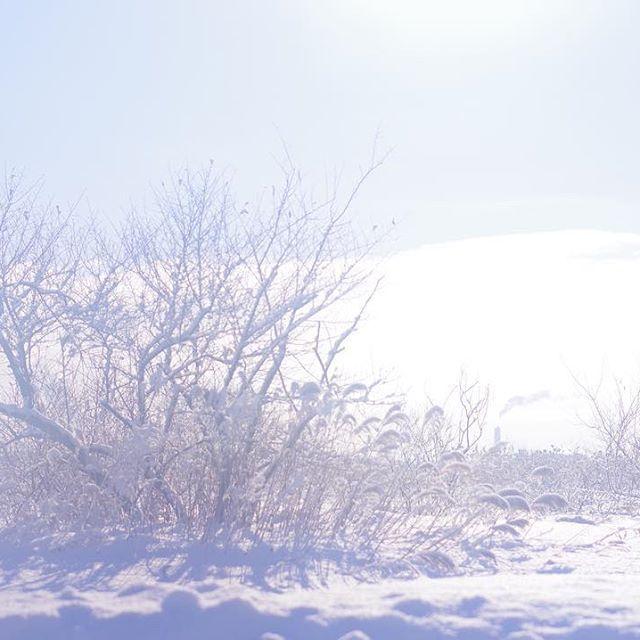 Instagram【t_ura_ara】さんの写真をピンしています。 《《2017.1.25》 レンズにハァ〜っと曇らせてふんわり撮影📷  #PENTAX #k70 #一眼レフ #一眼レフ初心者 #苫小牧 #北海道 #写真好きな人と繋がりたい #写真撮ってる人と繋がりたい #ファインダー越しの私の世界 #写真  #カメラ #カメラ男子  #camera  #pic #followme #yolo #雪 #夜景撮影 #夜景 #美容師 #路地裏 #手持ち撮影 #単焦点 #単焦点レンズ  #車 #道路 #雪 #雪景色》