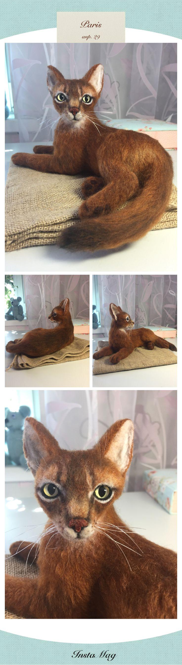 Абиссинская кошка Люся