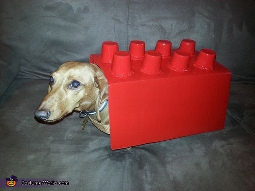 Amy: This is Shorty my 4 year old Dachshund in a hand crafted lego costume. It was a box that was cut down to size,then cut holes in the top and...