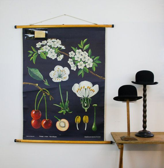 vintage botanical pull-down chart // etsy
